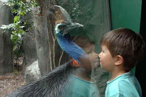 Ancak eğer karşınıza çıkarsa, dikkatli olmanızda fayda var. Zira bu kuşun pençeleri de, gagası da aynı derecede ölümcül.