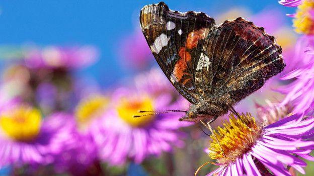 Güneşli, kurak iklimiyle Valais Avrupa'nın en büyük kelebek habitatına sahip. Milli parkta kantonun Almanca ve Fransızca konuşan bölümlerini birbirinden ayıran ormanlık doğal bir sınır da bulunuyor.