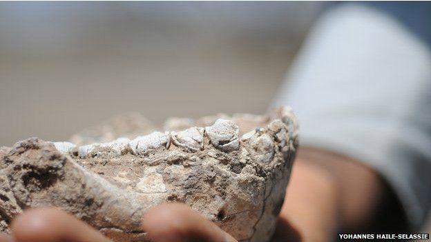 Bulunan kemikler 3 milyon yılı aşkın bir süre önce yaşayan dört canlıya ait.