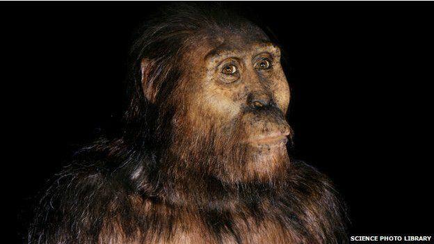 'Lucy' diye anılan Australopithecus afarensis'in modern insanın doğrudan atası olduğu düşünülüyordu.