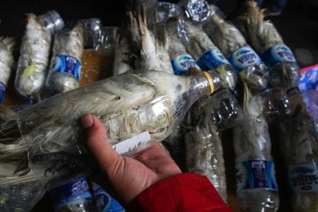 Operasyonda boş su şişeleri içine konularak yasadışı yollardan ticareti yapılan 24 adet kakadu papağanı ele geçirildi.