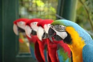 papaganlar_konusma_01_th