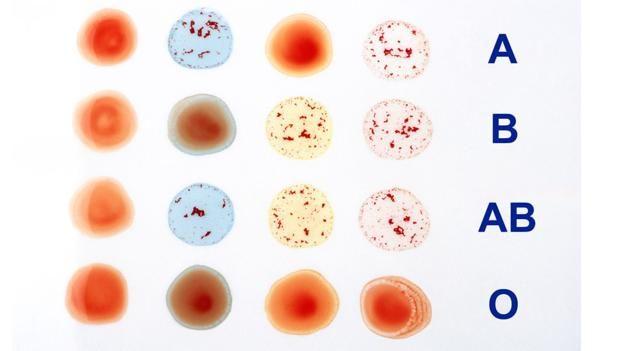 Kan gruplarının oluşumunu hiç merak ettiniz mi?