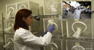 Zika virüsü: 'Virüs Dünya Üzerinde Büyük Bir Salgına Dönüşebilir'