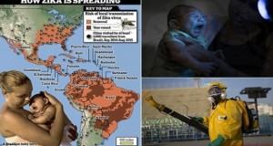 Zika virüsü Dünya Sağlık Örgütünü harekete geçirdi