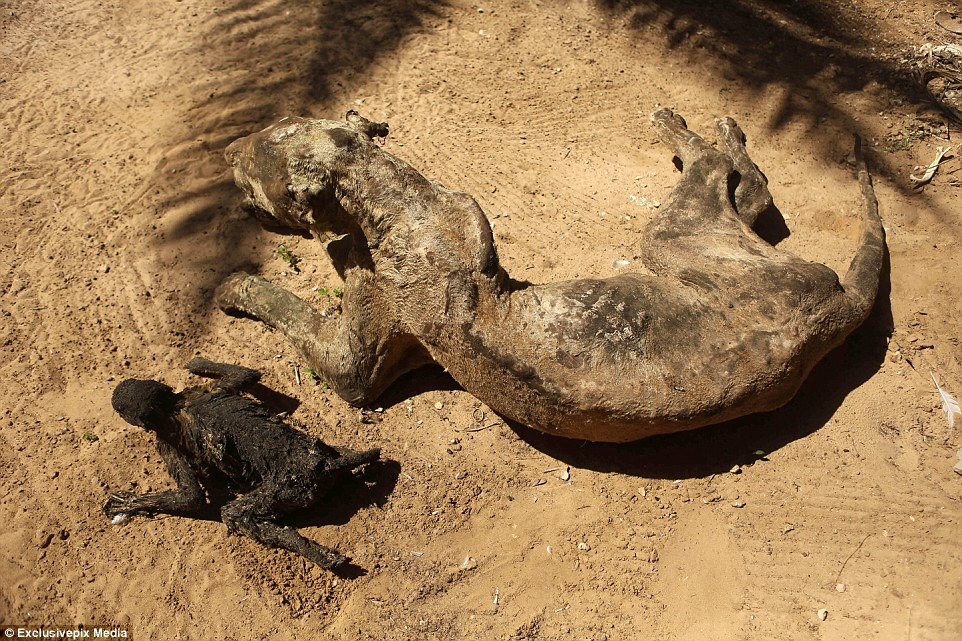 Starved to death and left to MUMMIFY in the world's worst zoo