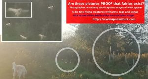 Are these pictures PROOF that fairies exist?