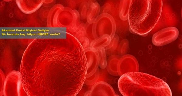 Kişisel Gelişim İnsan Hücreleri: İnsan'da Kaç Trilyon Hücre Vardır