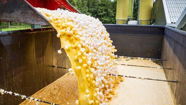 Fipronilli Yumurta Krizi Avrupa'ya Yayılmış Durumda