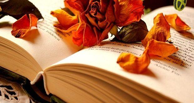 İngiltere'nin en iyi 20 romanı