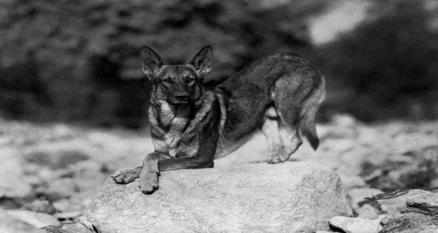 Alman Kurt köpeğinin Oskar'la Nasıl Bir İlgisi Olabilir ki?