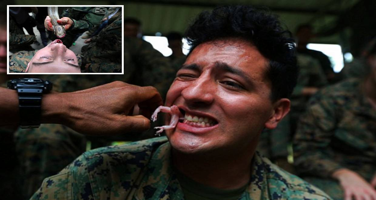 US Marines drink snake blood in Cobra Gold training exercise