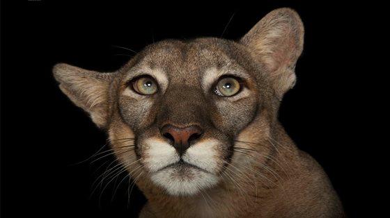 Galeri: Nesli tükenen hayvanların fotoğrafları