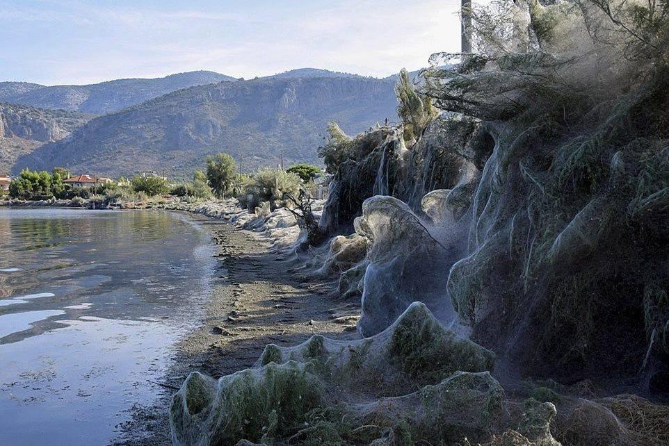 Yunanistan'ın Aitoliko kasabasında 300 metrelik örümcek ağı