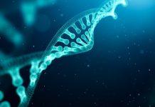 DNA Eşlenmesi: Hücrelerin bölünmesi rastgele gerçekleşen bir olay değildir