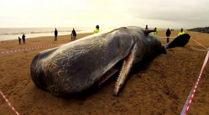 Seaspiracy: Netflix belgeseli yoğun bir tartışmayı ateşledi